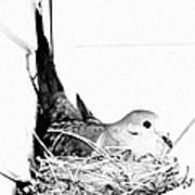 Nesting Mama Art Print