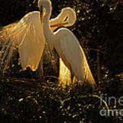 Nesting Pair Of Snowy Egrets Art Print