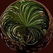 Nesting Pine Orb Art Print