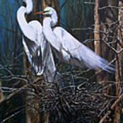 Nesting Snowy Egrets Art Print