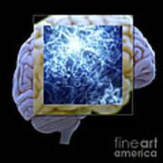 Neuron And Brain Art Print