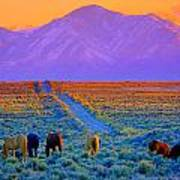 Wild Horse Country  Art Print by Jeanne  Bencich-Nations