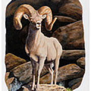 Nevada Desert Bighorn Art Print