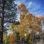 Nevada Fall Colors Art Print