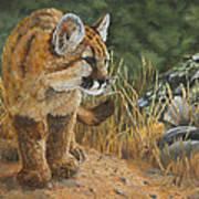 New Adventures - Cougar Cub Art Print