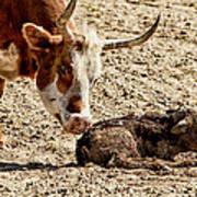 New Born Cow Calf Art Print