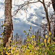 New Generation - Casper Mountain - Casper Wyoming Art Print