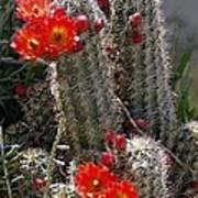 New Mexico Cactus Art Print
