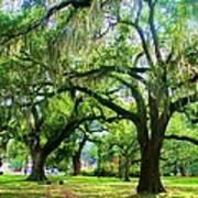 New Orleans City Park - Live Oak Art Print