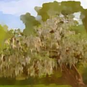New Orleans Spanish Moss On Live Oaks Art Print by Christine Till