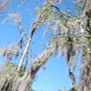 New Orleans - Swamp Boat Ride - 1212127 Art Print