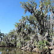 New Orleans - Swamp Boat Ride - 1212135 Art Print