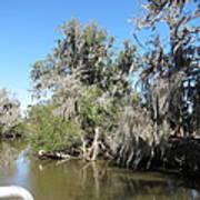 New Orleans - Swamp Boat Ride - 1212141 Art Print