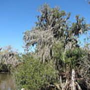 New Orleans - Swamp Boat Ride - 1212144 Art Print