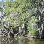New Orleans - Swamp Boat Ride - 121231 Art Print