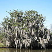 New Orleans - Swamp Boat Ride - 121244 Art Print