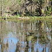 New Orleans - Swamp Boat Ride - 121249 Art Print