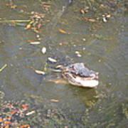 New Orleans - Swamp Boat Ride - 121255 Art Print