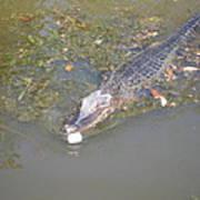 New Orleans - Swamp Boat Ride - 121260 Art Print