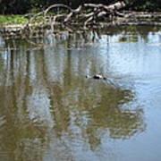 New Orleans - Swamp Boat Ride - 121264 Art Print