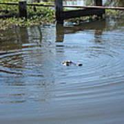 New Orleans - Swamp Boat Ride - 121276 Art Print