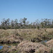 New Orleans - Swamp Boat Ride - 121292 Art Print