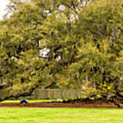 New Orleans' Tree Of Life 2 Paint Art Print