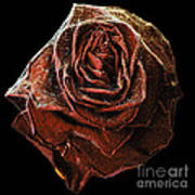 Perfect Gothic Red Rose Art Print