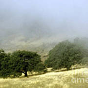 Mist In The Californian Valley Art Print
