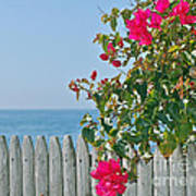 New Photographic Art Print For Sale On The Fence Montecito Bougainvillea Overlooking The Pacific Art Print