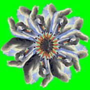 New Photographic Art Print For Sale Pop Art Swan Flower On Green Art Print