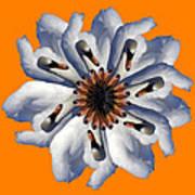 New Photographic Art Print For Sale Pop Art Swan Flower On Orange Art Print