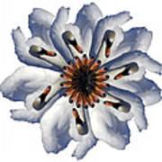 New Photographic Art Print For Sale Pop Art Swan Flower On White Art Print