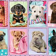 New Puppy Multipic Art Print by Greg Cuddiford