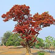 New Spring Leaves On Tree  Art Print