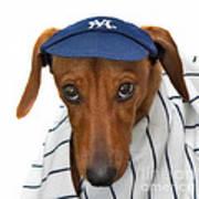 New York Yankee Hotdog Art Print
