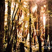New Zealand Bush Art Print