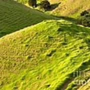New Zealand Farmland Art Print