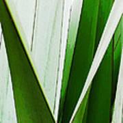 New Zealand Flax Simplified Art Print