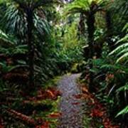 New Zealand Rainforest Art Print
