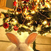 New Zealand White Rabbit Under The Christmas Tree Art Print