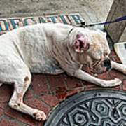 Newsworthy Dog In French Quarter Art Print