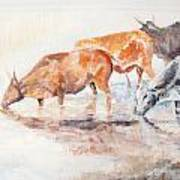 Nguni Cattle Art Print by David  Hawkins