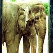 Niabi Asian Elephants Art Print