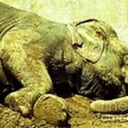 Niabi_asian Elephant Art Print