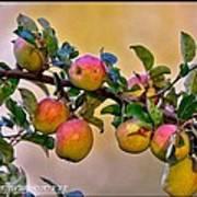Nice Apples  Art Print