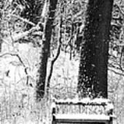 Nichols Arboretum Art Print