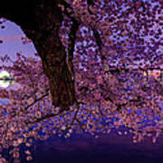 Night Blossoms Art Print by Metro DC Photography