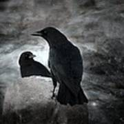 Mysterious Night Crows Art Print