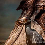 Night Heron And Crawdaddy Art Print